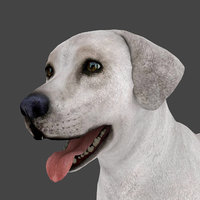 MLAB-001 Animated Male Dog