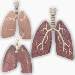 human anatomic lungs 3D model