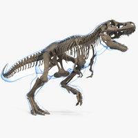 3D model tyrannosaurus rex skeleton fossil