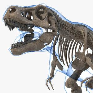 tyrannosaurus rex skeleton fossil model