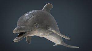 3D dolphin animal mammal model