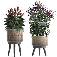 decorative plants kitchen pepper 3D model