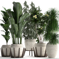 collection of exotic plants in white pots 425