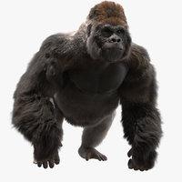 3D lowland gorilla rigged