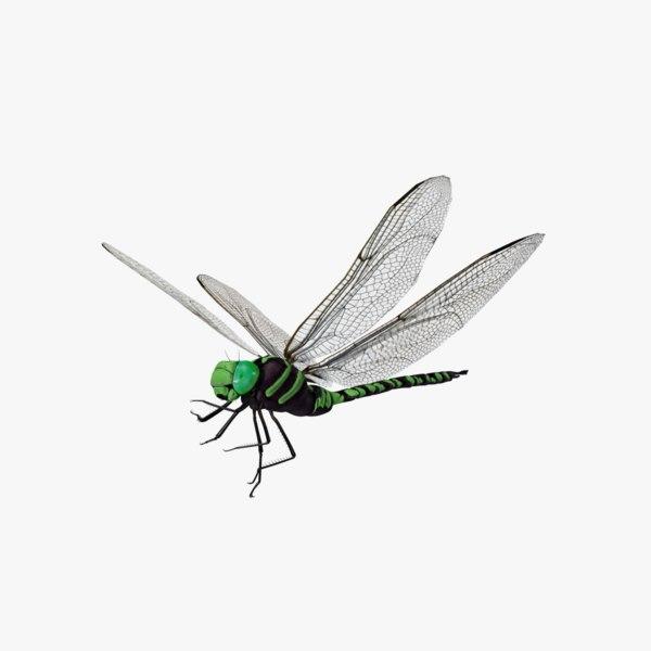 green aeshna dragonfly 3D model