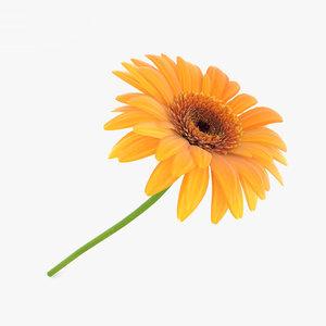 gerbera daisy flowers 3D