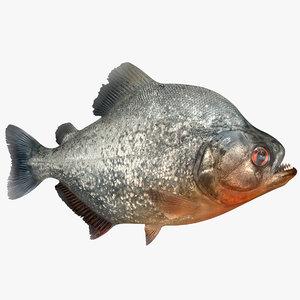piranha fish rigged model