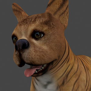 3D rigged male dog model