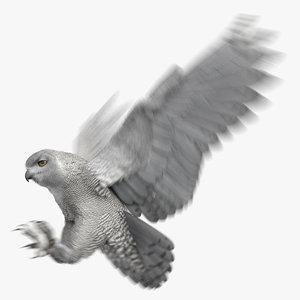 snowy owl animation model