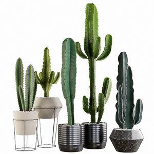 3D cactus plants set model