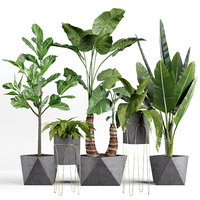 Plants collection 07