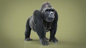animal primate monkey 3D model
