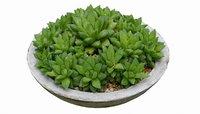 Cactus Concrete Pot 2