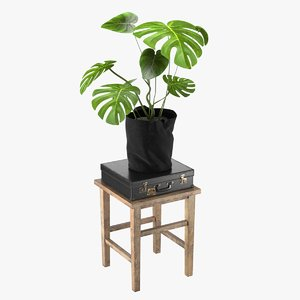 3D realistic stool plant