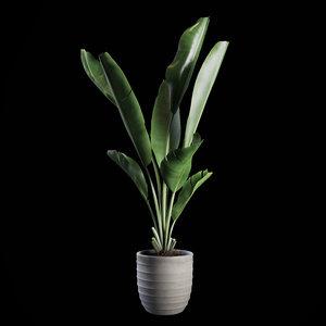 indoor plants set 01 3D