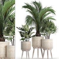 houseplants exotic plants white 3D model