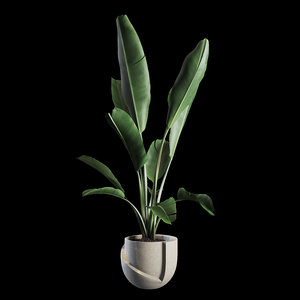 indoor plants set 02 3D model