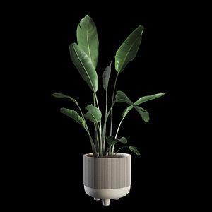 3D model indoor plants set 04