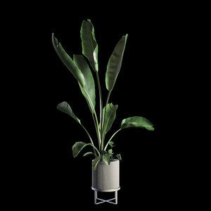 3D indoor plants set 05