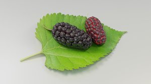 3D mulberry berry