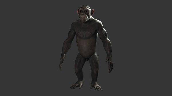 3D chimp skeleton model
