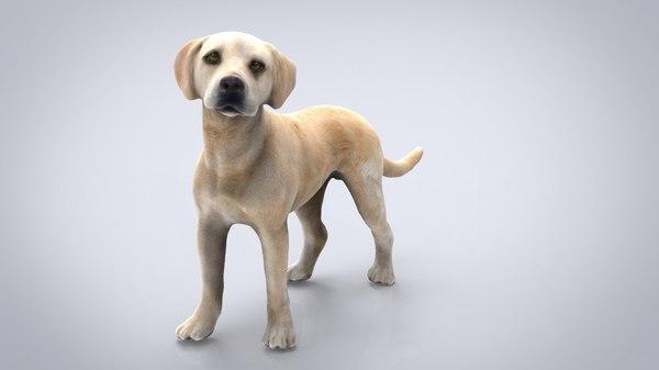 dog canine animal 3D
