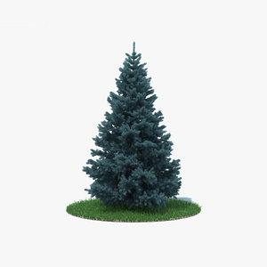 blue spruce 3D