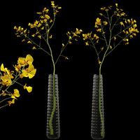 Orchid oncidium in a modern vase