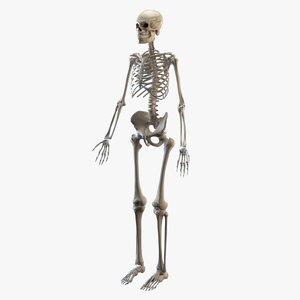 3D human osseous model