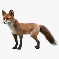 Red Fox Fur Rigged