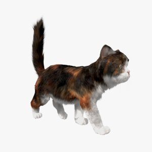 cat fur animations 3D model