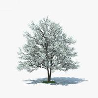 3D flowering dogwood