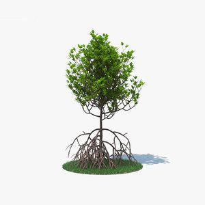 mangrove tree nature model