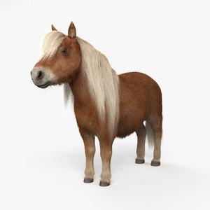 3D shetland pony