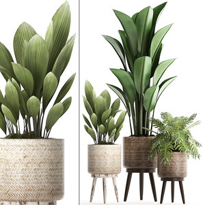3D white exotic plants model