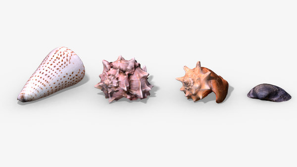seashell photorealistic 3D