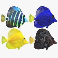 3D zebrasoma coral reef fish
