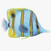 3D chelmon rostratus coral reef