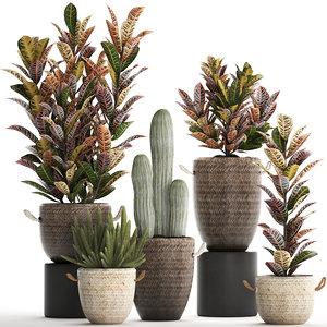 houseplants exotic plants croton 3D model