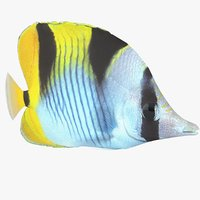 3D butterfly coral reef fish