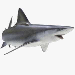 3D bignose shark rigged model