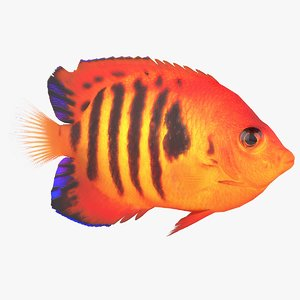 centropyge coral reef fish 3D