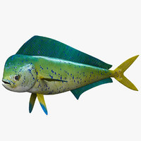 Dolphinfish Mahi
