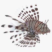 lionfish coral reef fish model