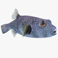 arothron coral reef fish 3D model
