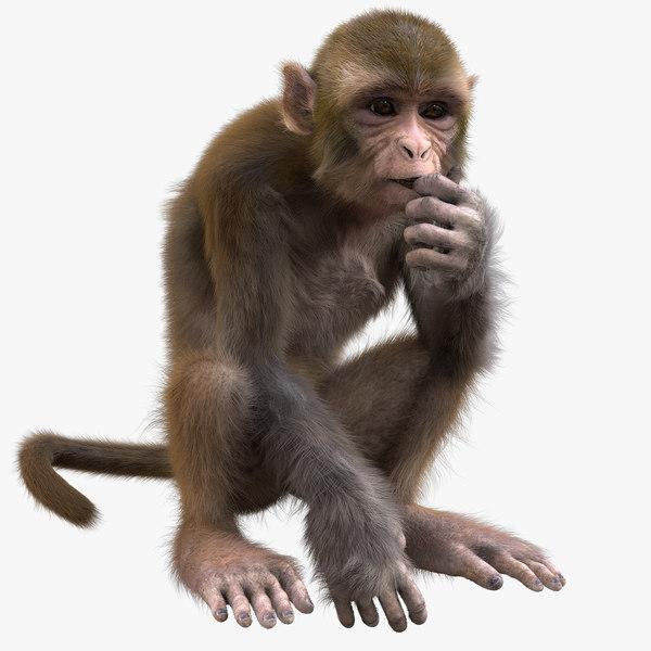 monkey rigged model