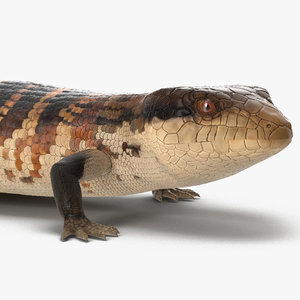 blue tongued skink rigged 3D model