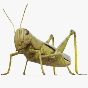 3D model grasshopper rig