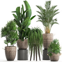 Collection of exotic plants Croton 431