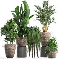 houseplants exotic plants 3D model